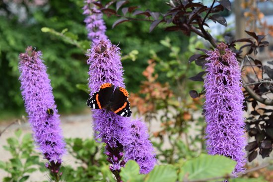 Jabbeke, Belgium: tuin in bloei ... een gedekte tafel voor d evlinders ...
