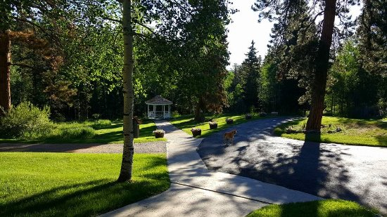 Pine, Kolorado: Our Welcoming Committee (Kelly) Awaits