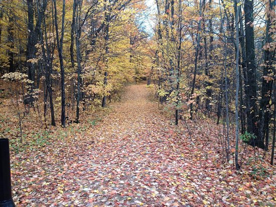 Minden, Canada: A walk in The Woods