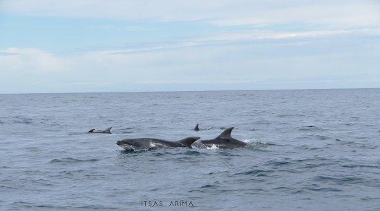 Saint-Jean-de-Luz, Fransa: Grand dauphin