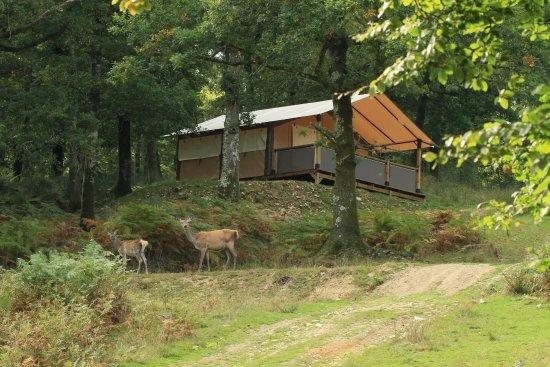 Priziac, Francia: Bungalow toilé au cœur du domaine