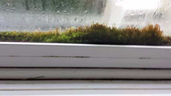 Ocean Shores, WA: Moss growing between panes