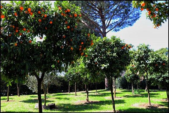 Giardino degli aranci foto di villa medici accademia di francia a roma roma tripadvisor - Il giardino degli aranci frattamaggiore ...