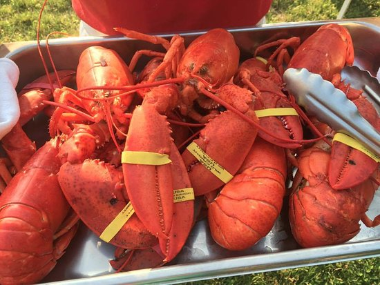 Little Compton, RI: Friday Night Live Lobster Dinners!!!  Every Friday, all summer