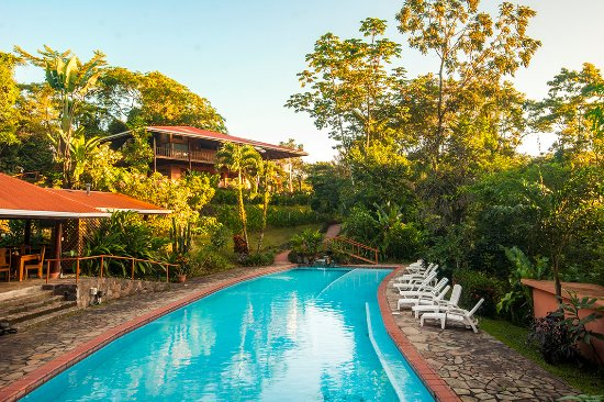 Finca Luna Nueva Lodge: An afternoon by our Ozonated Swimming Pool