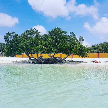 Aruba Surfside Marina: photo0.jpg