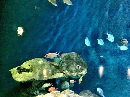 Dubuque, IA: Aquarium views.