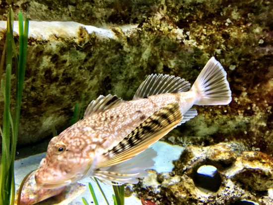 Dubuque, IA: Aquarium views