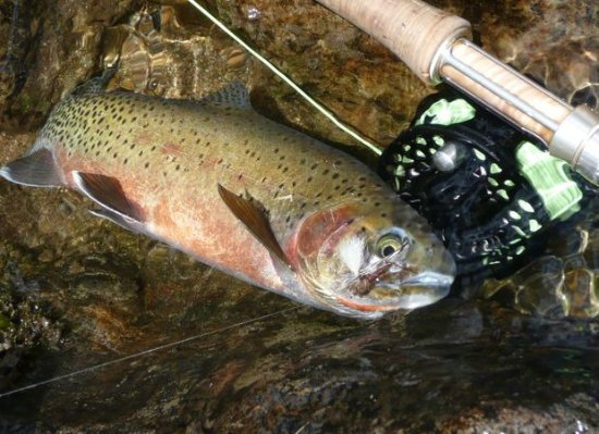 Riggins, ID: World-class cutthroat fly fishing on a 2 or 3 day wilderness escape
