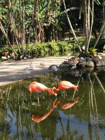Flamingo Gardens 이미지