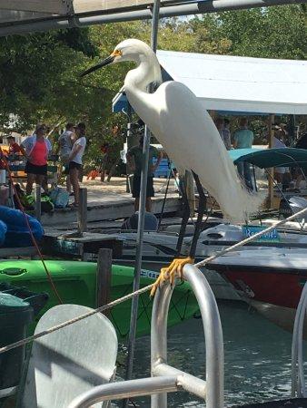 Lake Monroe, Φλόριντα: photo0.jpg