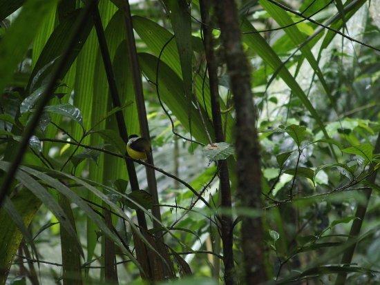 Selva Verde Lodge: photo3.jpg