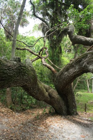 Indian Mound Park : Great Trees