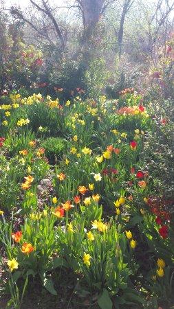 abq biopark botanic garden tulips at albuquereque biopark botanical garden - Abq Biopark Botanic Garden