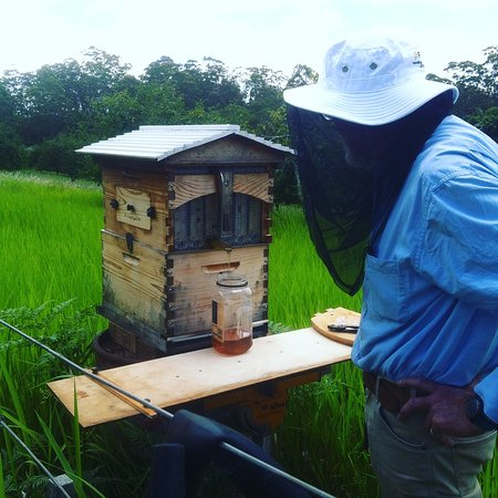 Ravensbourne, Australia: collecting honey