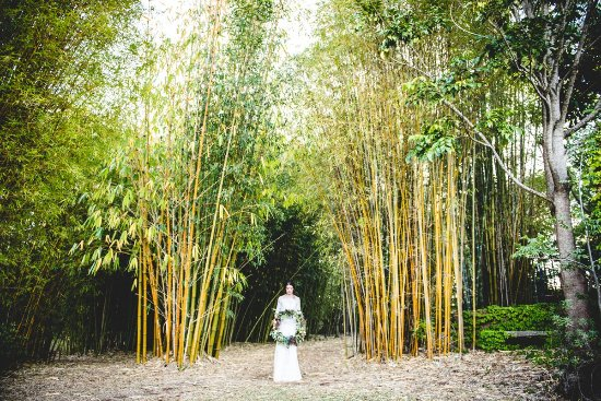 Ravensbourne, Australia: Wedding in the Bamboo Cathedral