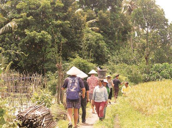 Temuku Aya - Bali Farming Life