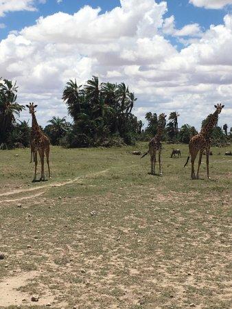 Julius Tact Safaris - Private Day Trips: photo0.jpg