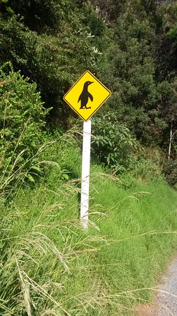Mangonui, Nya Zeeland: This sign just a hundred yards round the corner from Waterfront cafe.