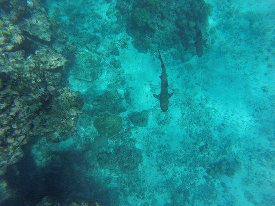 Waya Lailai, Fiji: photo2.jpg