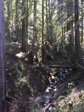 Sonoma Canopy Tours: photo0.jpg