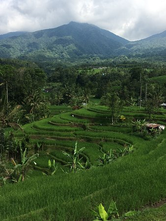 Tegalalang Rice Terrace : photo4.jpg