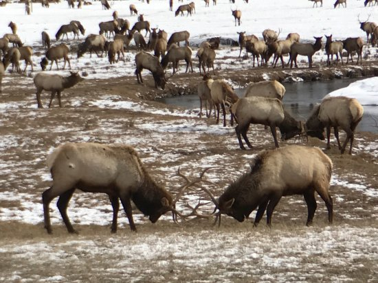 ‪National Elk Refuge‬
