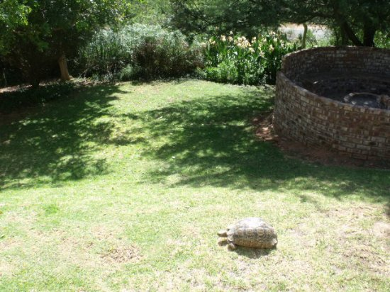 De Poort Country Lodge: Private garden and boma at the Cottage