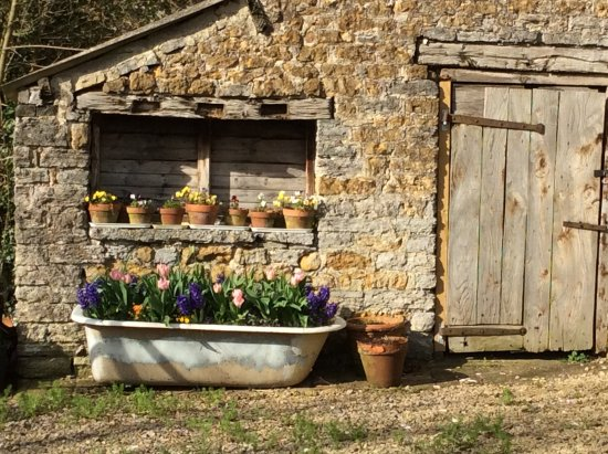 Castle Cary, UK: The old cast iron bath makes a wonderful place for Spring bulbs in the car park!