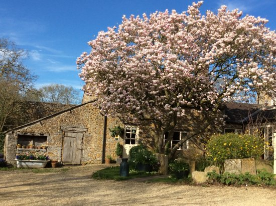 Castle Cary, UK: Magnolia tree in front of The Tallet, cottage sleeping 4 plus cot.