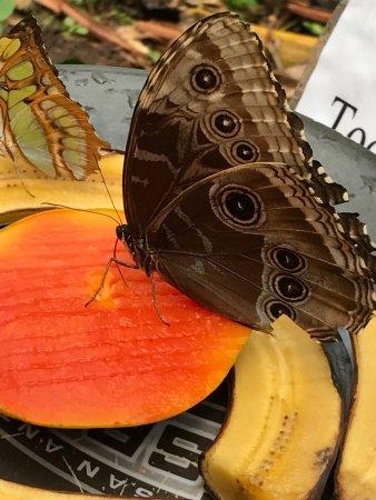 Butterfly Haven: photo1.jpg