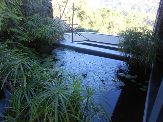 Petit jardin japonisant à l\'entrée du restaurant - Photo de Taj ...