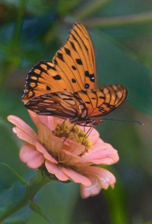 Brookgreen Gardens : Butterfly House open April - October