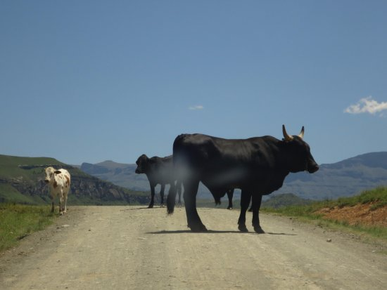 uKhahlamba-Drakensberg Park, South Africa: Road on way to the camp