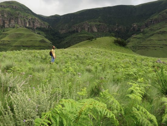 uKhahlamba-Drakensberg Park, Afrique du Sud : Lush greenery on the hike