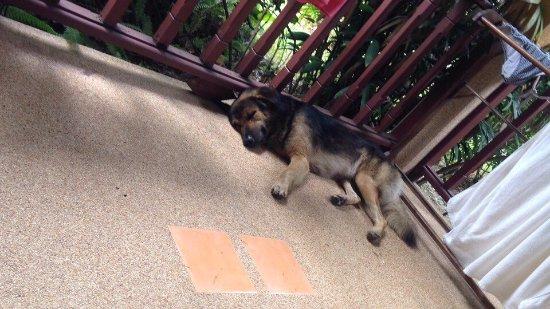 Lipa Noi, Thailand: На нашей террасе жил милый тайский пёс. Животное очень доброе и любит детей.