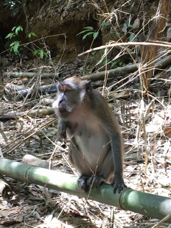 Khlong Sok, Thailand: Monkey on the Khao Sok Guided tour