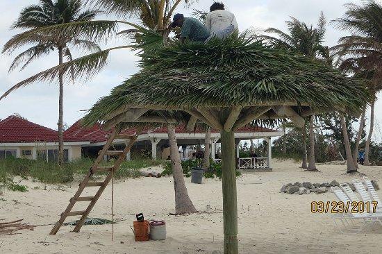 Taino Beach Resort & Clubs: Hurricane damaged palapas under repair (4 to go)