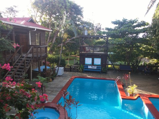 Utila Dive Center: the dorms at Mango inn lead out to a pool!