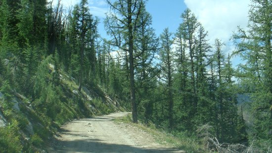 Darby, MT: Roadway up toward Salmon Mountain ca.7800ft