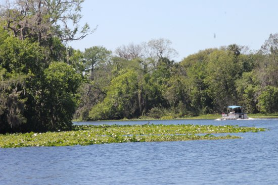 Orange City, FL: this is a shot of the main channel that the spring feeds into
