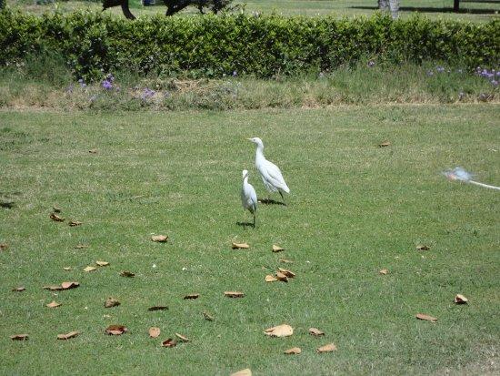 ماريتيم جولي فيل جزيرة الملوك الأقصر: Hejre i haven