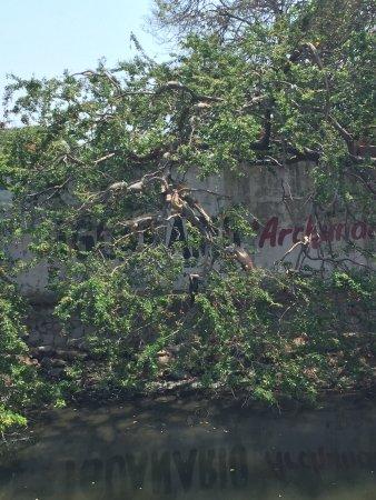 Iguanario Archundia: photo3.jpg