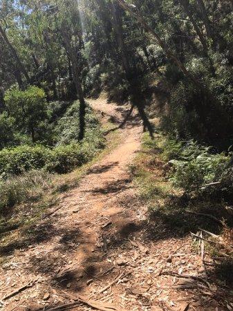Escapegoat Adventures : Part of the Mt Lofty Descents trail. Exquisite!!