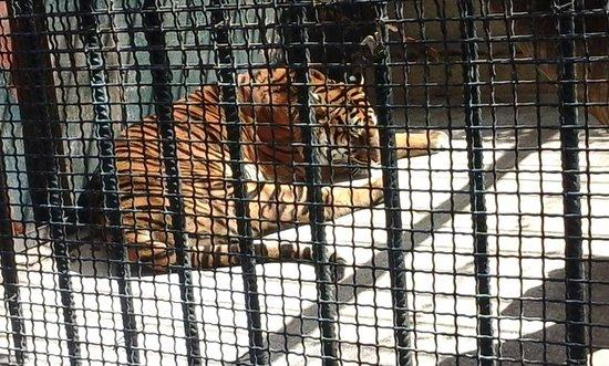 Alger, Algerie: Parc animalier el hamma