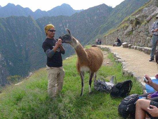 Kuntur Peru