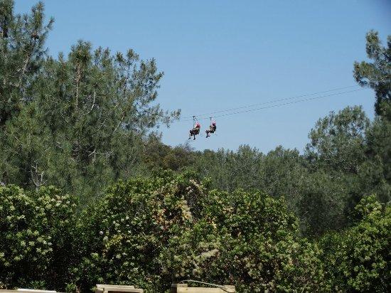 Vallecito, CA: Dual Zipliners