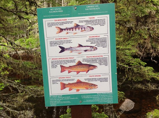 Main Brook, Canadá: You will find educational information posted throughout.