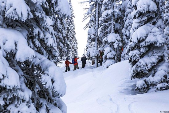 Sandpoint, ID: Selkirk Powder Cat Skiing