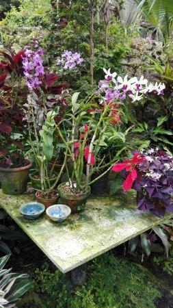 Hunte's Gardens照片